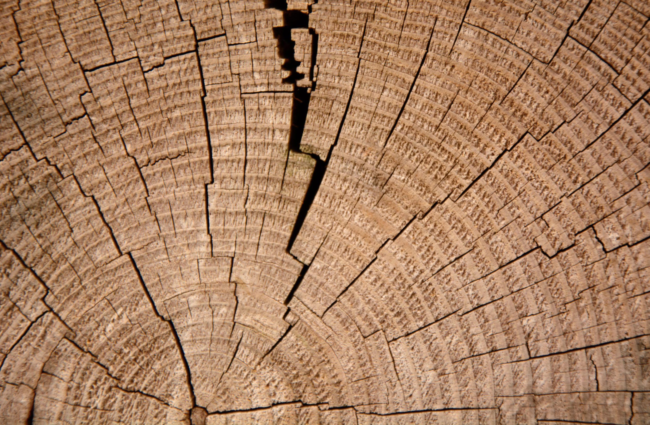 Wood cracking